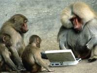 """Облаке EC2 Amazon завелись """"виртуальные обезьяны"""""""