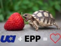 В домене .UA ввели протокол EPP
