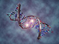 Учёные использовали ДНК для хранения электронной книги