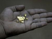 Стартапы —  золотая лихорадка 21-го века