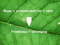 Создан искусственный аналог природного фотосинтеза