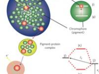 К квантовым компьютерам через фотосинтез