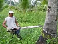 Вырубку деревьев будут контролировать смартфонами