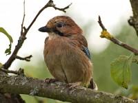 Мобильные приложения с поющими птицами подверглись критике