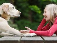 Американцы разрабатывают переводчик с языка животных