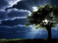 Учёные предлагают делать аккумуляторы из дерева