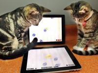 Видеоигры для домашних кошек активно набирают популярность