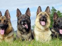 Google разрабатывает систему связи собак с людьми
