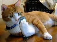 Вышло приложение для кошачьих автопортретов