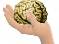 Cоздана миниатюрная модель человеческого мозга