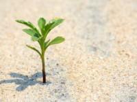"""Итальянский робот-растение теперь умеет """"пускать корни"""""""