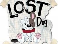 Программа распознавания лиц отыщет потерянную собаку