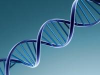 Интеллектуальную собственность будут защищать ДНК-маркерами