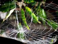 Американцы создали сверхпрочный проводник из обычной паутины