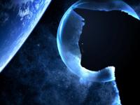 Иран отправляет в космос персидского кота