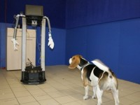 Исследователи научили собак общаться с роботами