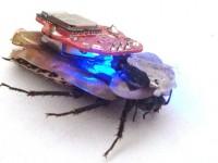 Роботаракан с Bluetooth-управлением поступил в продажу