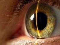 Биометрия наступает: в Samsung Galaxy S5 будет сканер сетчатки глаза
