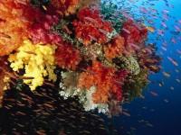 Учёные составили 3D-карту крупнейшего в мире кораллового рифа