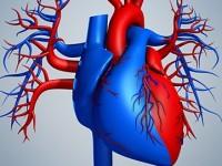 Американцы обещают напечать 3D-сердце уже через 10 лет