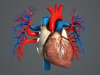 Первая в мире 3D-голограмма сердца поможет кардиологам