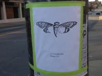 Близится время появления третьей загадки от анонимной группы Cicada 3301
