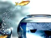 Подводные камни услуги смены мобильного оператора с сохранением номера
