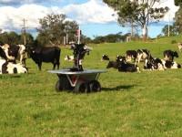 Австралийские инженеры создали робота для наблюдения за стадом на пастбище