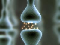 Создан транзистор, имитирующий работу головного мозга