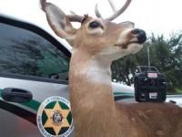 Американских браконьеров ловят на роботов-оленей