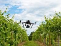 Во Франции запустили первые беспилотники для присмотра за виноградниками