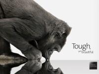 Создано новое поколение Gorilla Glass для носимой электроники