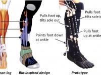 Роботизированная нога с пневмомышцами поможет реабилитироваться после травмы