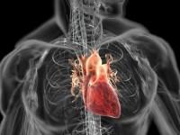 Сердце человека будет заряжать имплантаты в его теле