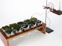 Создано радио, которое работает от энергии фотосинтеза растений
