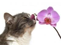 Американцы создали сверхчувствительные сенсоры по образцу усов животных