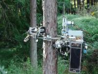 Японцы создали робота-лесоруба чтобы избавить людей от опасной работы