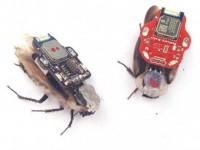 Японцы приспособили робонасекомых для производства электричества