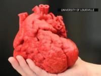 Технологии 3D-печати используют для создания живого человеческого сердца