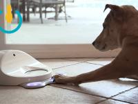 Появилась игровая консоль для развлечения домашних собак
