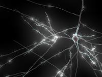 В Швейцарии создают карту человеческого мозга на суперкомпьютере