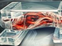 В США создали управляемых электричеством биороботов из мышечной ткани