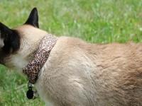Американец использует кота чтобы находить уязвимости в Wi-Fi сетях