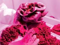 Учёные уже знают, как вырастить салат на Марсе
