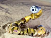 Робот-змея научился передвигаться по песку