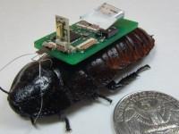 Кибернетические насекомые будут находить людей под завалами