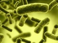 Американские учёные превратили бактерию в запоминающее устройство