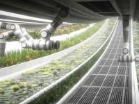 SpaceX ищет фермера, который не страдает клаустрофобией и умеет работать с ПК
