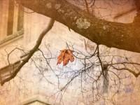 В Великобритании изобрели искусственный древесный лист
