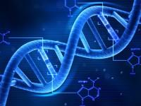 Учёные хотят превратить ДНК в надёжный жёсткий диск
